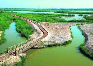 <strong>TANCAT DE LA PIPA.</strong> Una pasarela permite pasear entre la marjal. /F. DUART