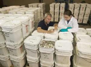 El cofundador de Odyssey, Greg Stemm (izquierda), examina el tesoro de La Mercedes en mayo de 2007.- AP