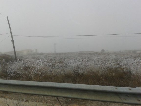 Cencellada, cerca de Alborea 2 (Albacete)