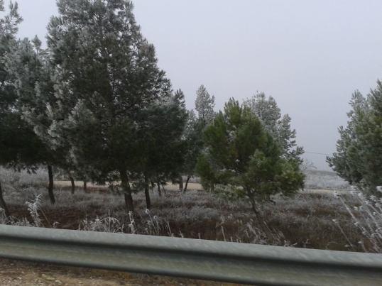 Cencellada, cerca de Alborea (Albacete) 1