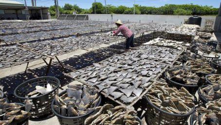 La aleta de tiburón es muy codiciada en Asia. / PEW ENVIRONMENT GROUP.