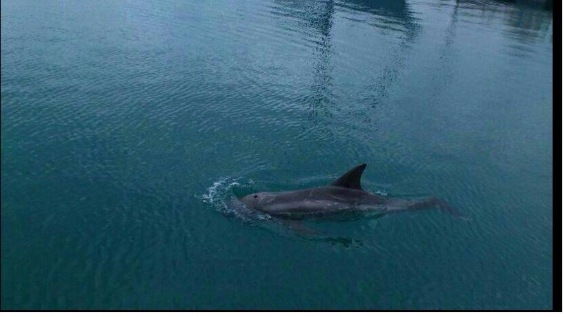 delfín en la marina real