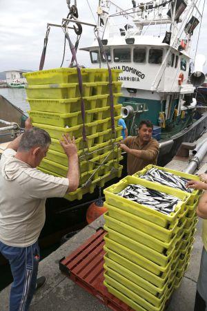 Descarga de anchoa en el puerto de Hondarribia. / JAVIER HERNÁNDEZ