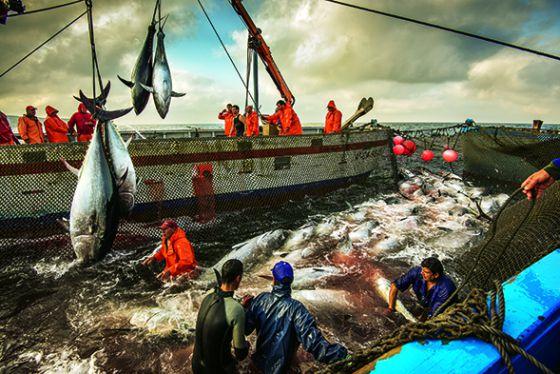 Abajo, Carlos, 'El Gitano', el capitán de pescadores, mira de frente dos atunes mientras la grúa los sube al barco. Abajo a la derecha, José 'El Moro'. / Alfredo Cáliz