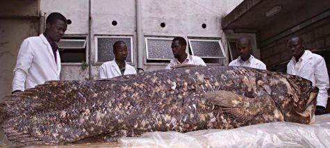 Un grupo de investigadores keniatas posan junto a un celacanto capturado en sus costas en 2001. (Reuters)