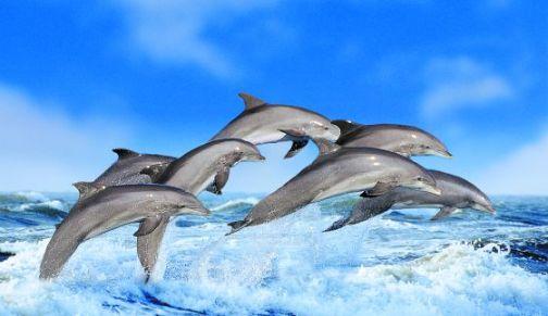 Grupo de delfines en el mar.