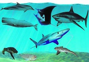 peces Mediterráneo