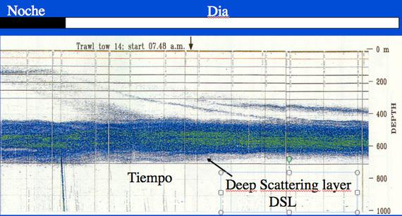 Ecograma mostrando la Deep Scattering Layer en el Océano Atlántico subtropical y como al amanecer los organismos regresan a profundidad (los puntos difusos que bajan en diagonal). Imagen de Santiago Hernandez-Leon (Univ. Las Palmas de Gran Canaria).