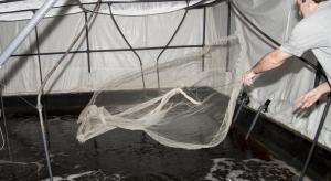 Pesca de langostinos en las piscinas de Gamba Natural en Medina del Campo Leer más:  Langostinos de tierra adentro - Noticias de Empresas  http://bit.ly/1gHe89u
