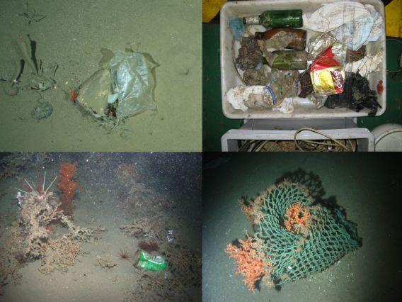 Imágenes de restos encontrados durante los muestreos.