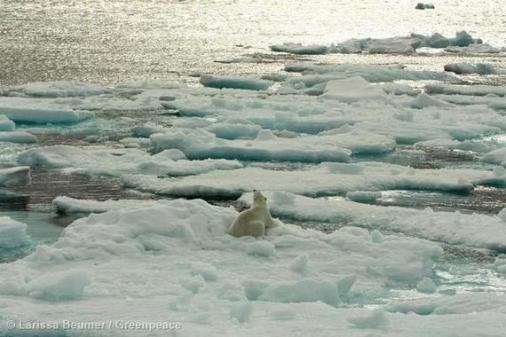 Polar Bear on Sea Ice Eisbaer auf Eisschollen