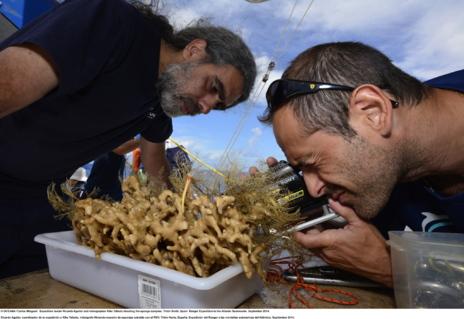 Ricardo Aguilar y otro miembro de la expedición examinan una especie capturada por el vehículo robótico. OCEANA