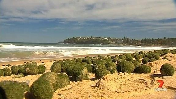 Las bolas, en el Dee Why Beach. / News 7