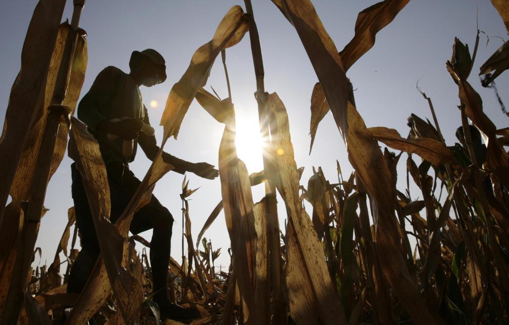 Un granjero observa los cultivos destrozados por El Niño en Manila en 2010 (Reuters)
