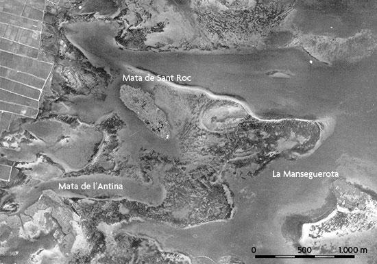 La imatge en blanc i negre (a dalt) correspon a una fotografia aèria de 1956. S'hi observa com la transparència de l'aigua permet veure les comunitats d'algues macròfites, asprella (Chara vulgaris) fonamentalment, que poblaven l'Albufera.