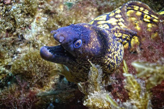 Una morena en la reserva marina de Cabo de Palos. / Claudio Alvarez