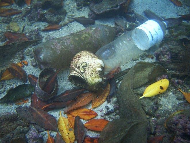 Fondo marino desde costa de Venezuela