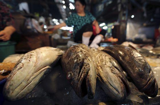 Mercado de pescados de Mahachai, en Tailandia. / NARONG SANGNAK (efe)