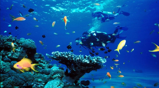 Ley para los Océanos, creada por la Convención de las Naciones Unidas en 1994, establece la solución obligatoria de controversias, para todas las actividades que se llevan a cabo en los océanos y los mares. Foto:vamosabucear.com Fuente de la foto: http://www.telesurtv.net/multimedia/8-de-junio-Dia-Mundial-de-los-Oceanos-20150608-0017.html.