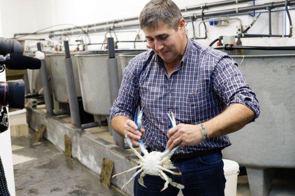 El científico Miguel Rodilla sostiene el cangrejo gigante que unos pescadores hallaron en aguas de Gandia. :: carlos ripollés