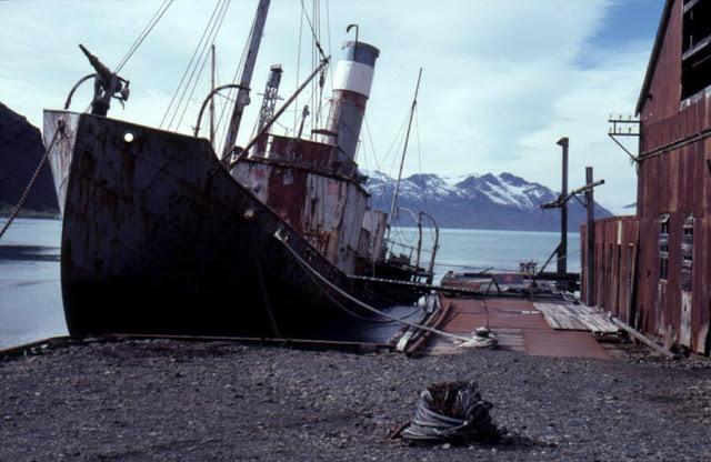 Grytviken 3