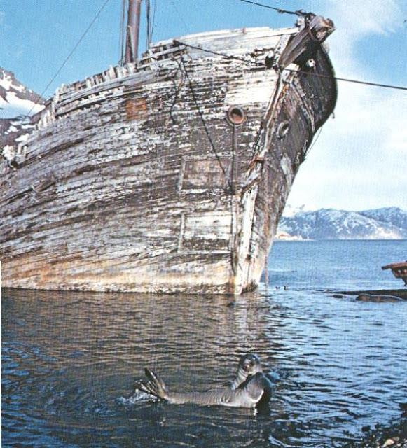 Grytviken 5
