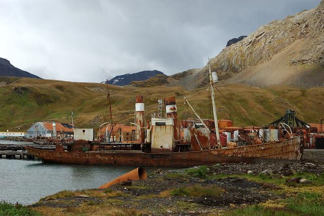Grytviken 6